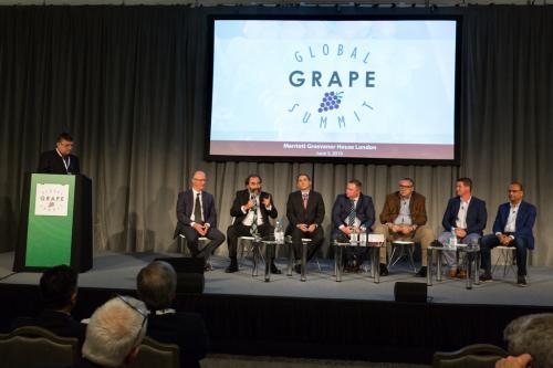 LPS 19' Grape Summit (60)